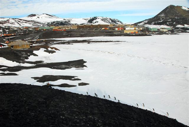 Adelie Penguins and McMurdo Station