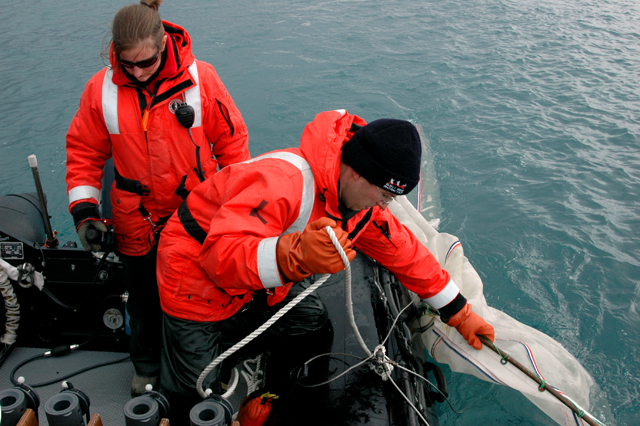 Scientists trawl for krill.