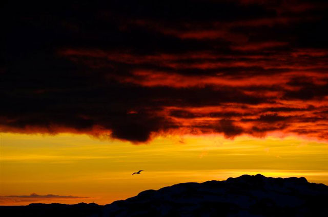 A bird flies across a dusky sky.