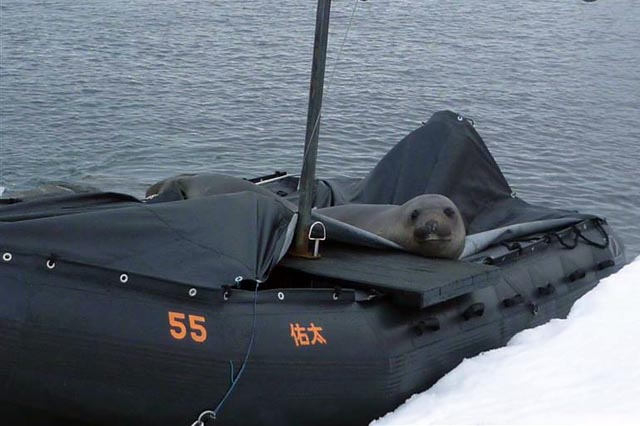 Seal sits in a boat.