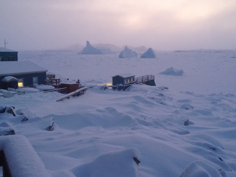 Several large icebergs locked in the thick sea ice in Arthur Harbor.