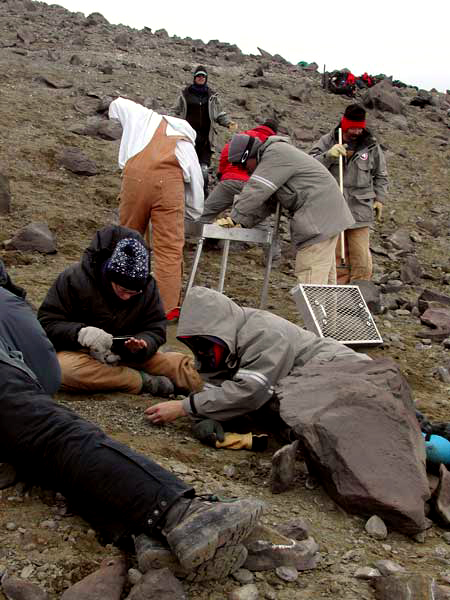 Scientists search for dinosaur fossils.
