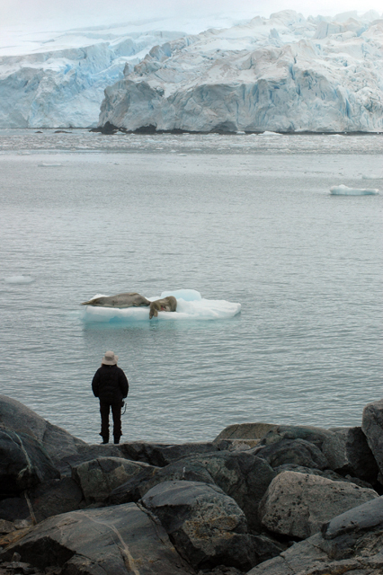 Dr. Feldman watches crabeater seals on ice floe.