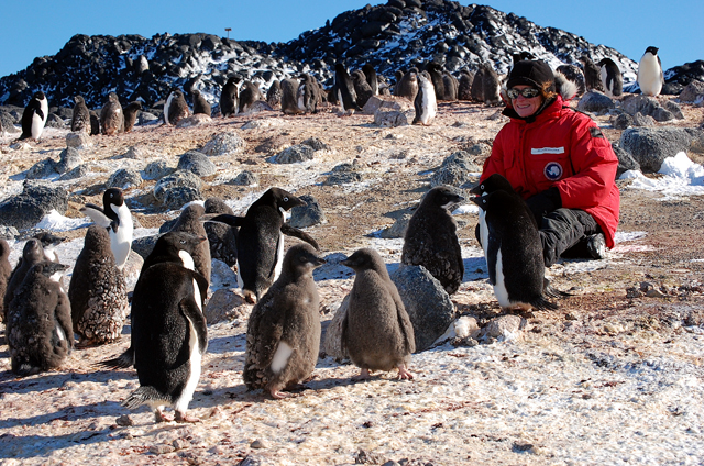 Woman sits down among penguins.