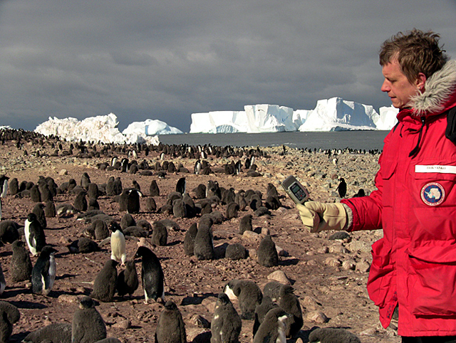 Man with recorder and penguins.