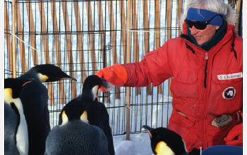 Scientist Jerry Kooyman with Emperor Penguins