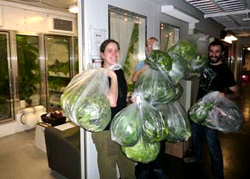 People carry plastic bags of produce.