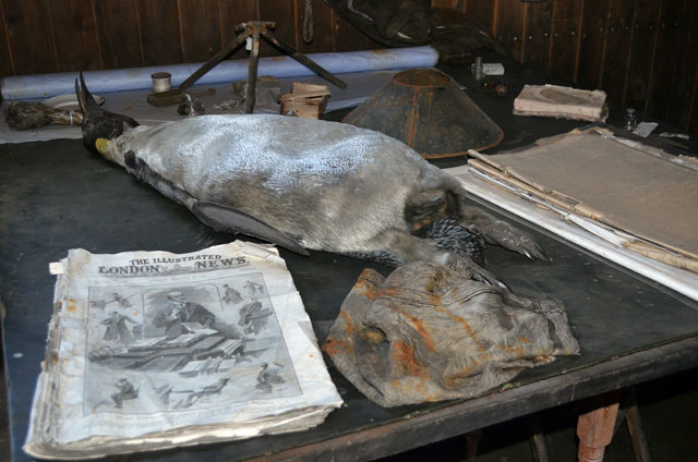 Newspaper and dead penguin on a table.