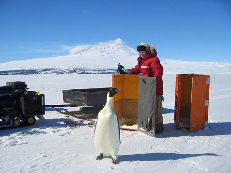 Person stands behind box and penguin.