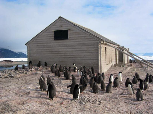 Penguins walk near wood building