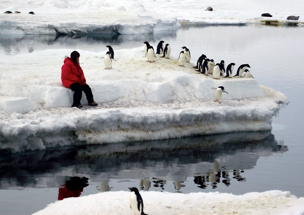 Person sits on ice floe surrounded by penguins.