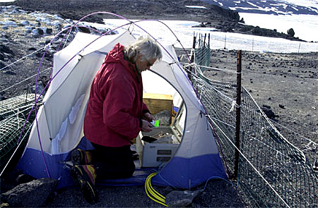Scientist working outside of tent.