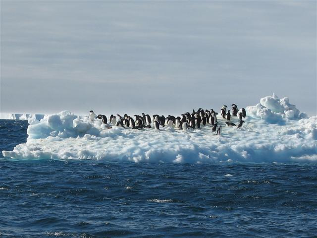 Penguins float on iceberg.