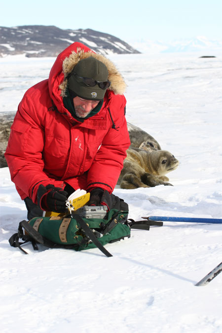 Man rummages through backkpack with seals in background.