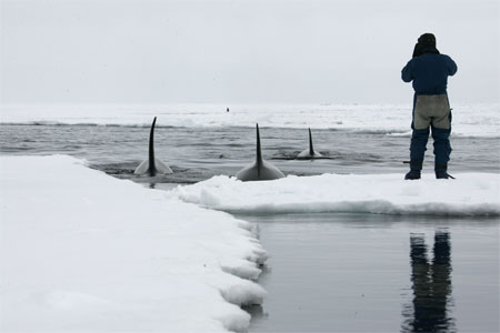 Person watches whale dorsal fins.