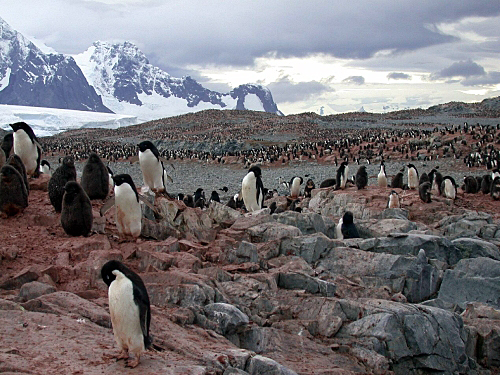 Penguins with mountains in the background.