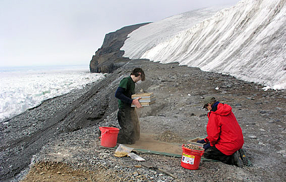 Scientists use screens to look for penguin remains.