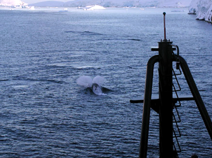 Ship follows whale through the Southern Ocean.