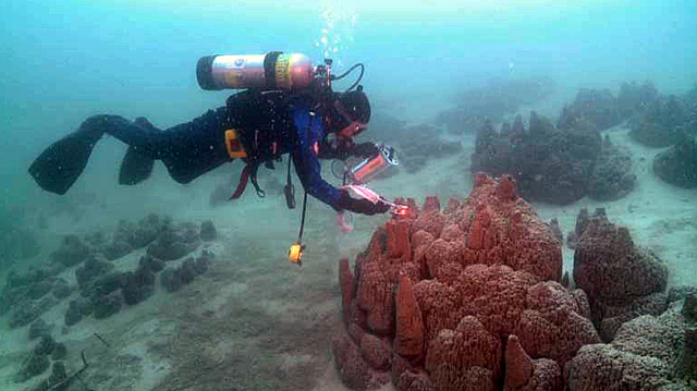 Diver examines carbonate structure in Canadian lake.