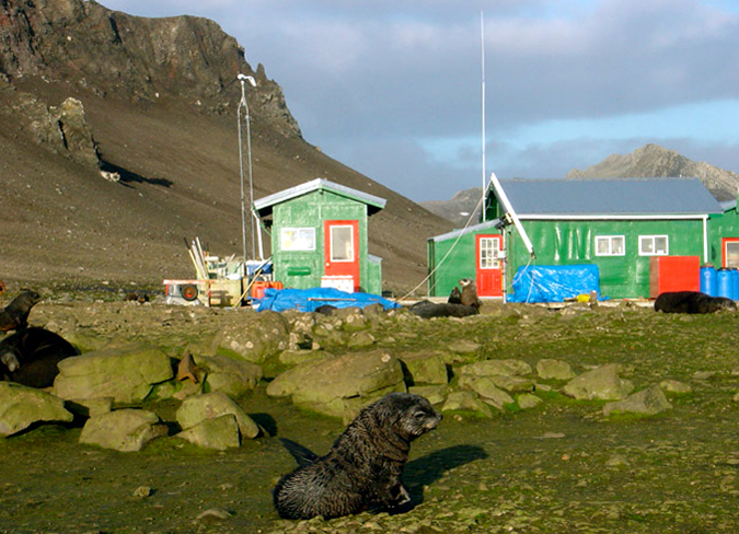 Fur seal sitting in front of colorful buildings.