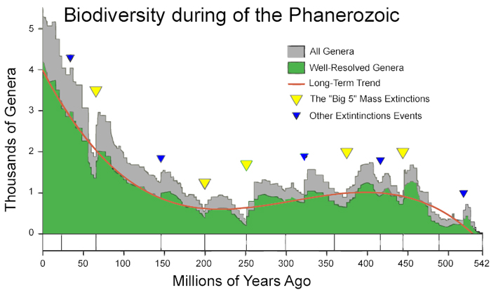 Graph of species and extinctions over 500 million years.