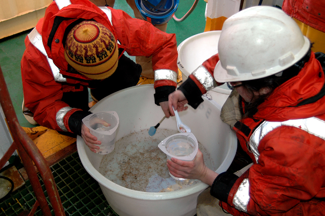 Scientists scoop specimens out of a bucket of water.