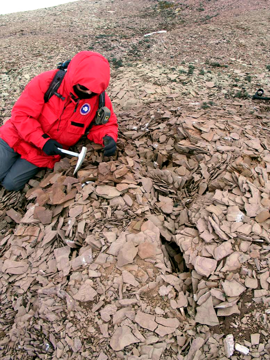 Researcher picks through rock for mammal fossils.