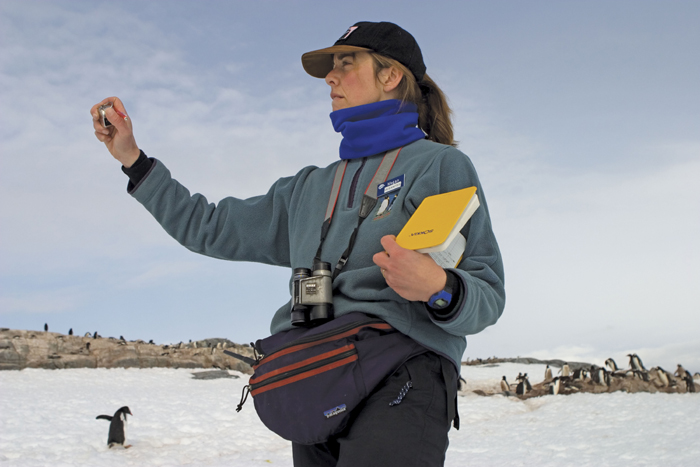 Megan McOsker conducts penguin survey.