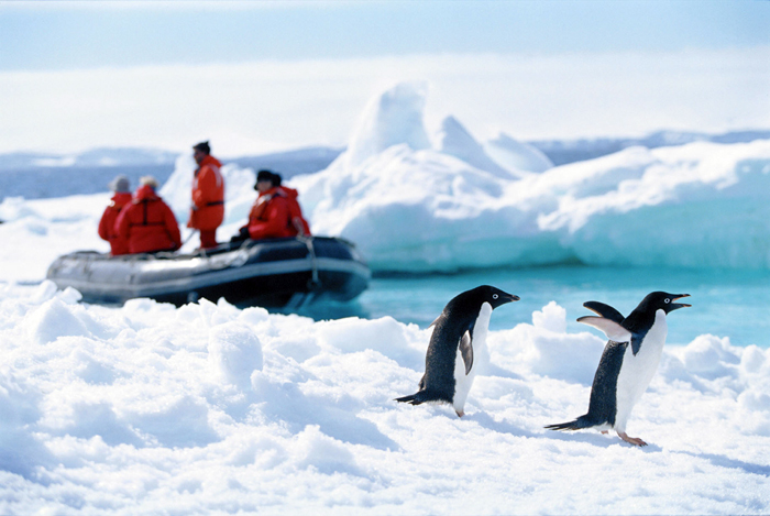 Researchers arrive at an island to study Adelie penguins.