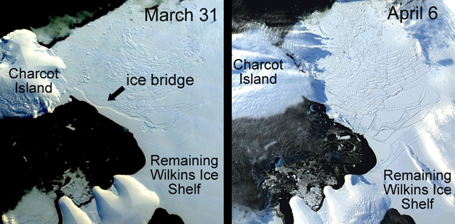 Wilkins Ice Shelf before and after ice bridge collapse.