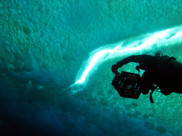 Diver ascends toward ice surface.