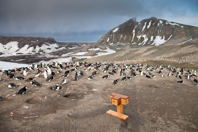 Box sits next to penguins.