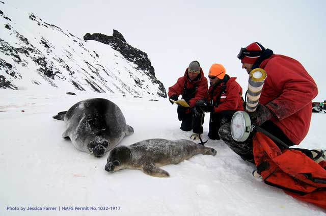Several people gather around two seals.