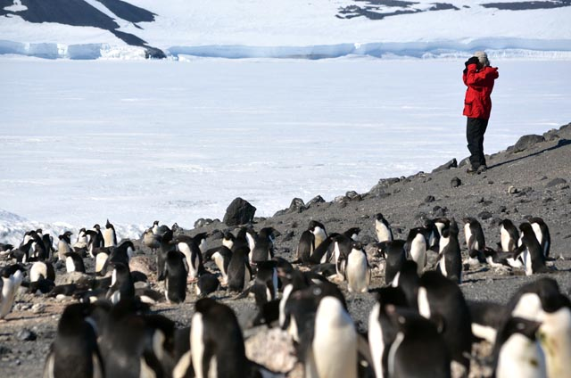Person with binoculars stands amongst penguins.