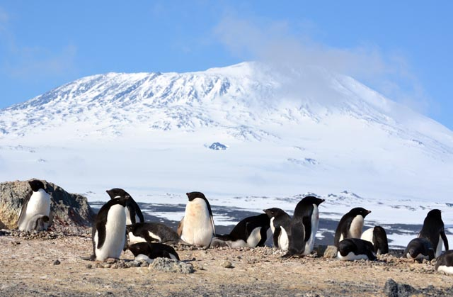 Penguin and their nests with mountain in background.