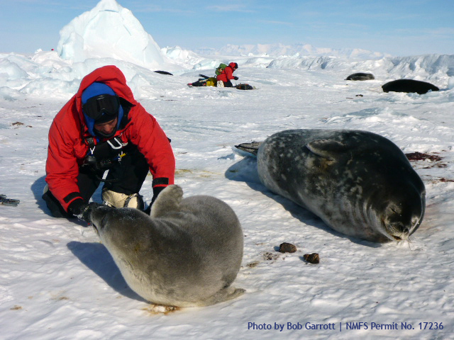 Person approaches two seals.