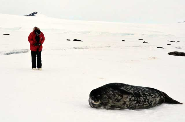 Person points a camera at a seal.