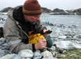 Scientist Richard Lee looks for the Antarctic insect Belgica Antarctica on Torgersen Island during the 2009-10 field season.