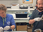 Researchers Candace Grimes (left) and Damien Waits process recently collected annelid worms in the lab on board the research vessel Nathaniel B. Palmer.